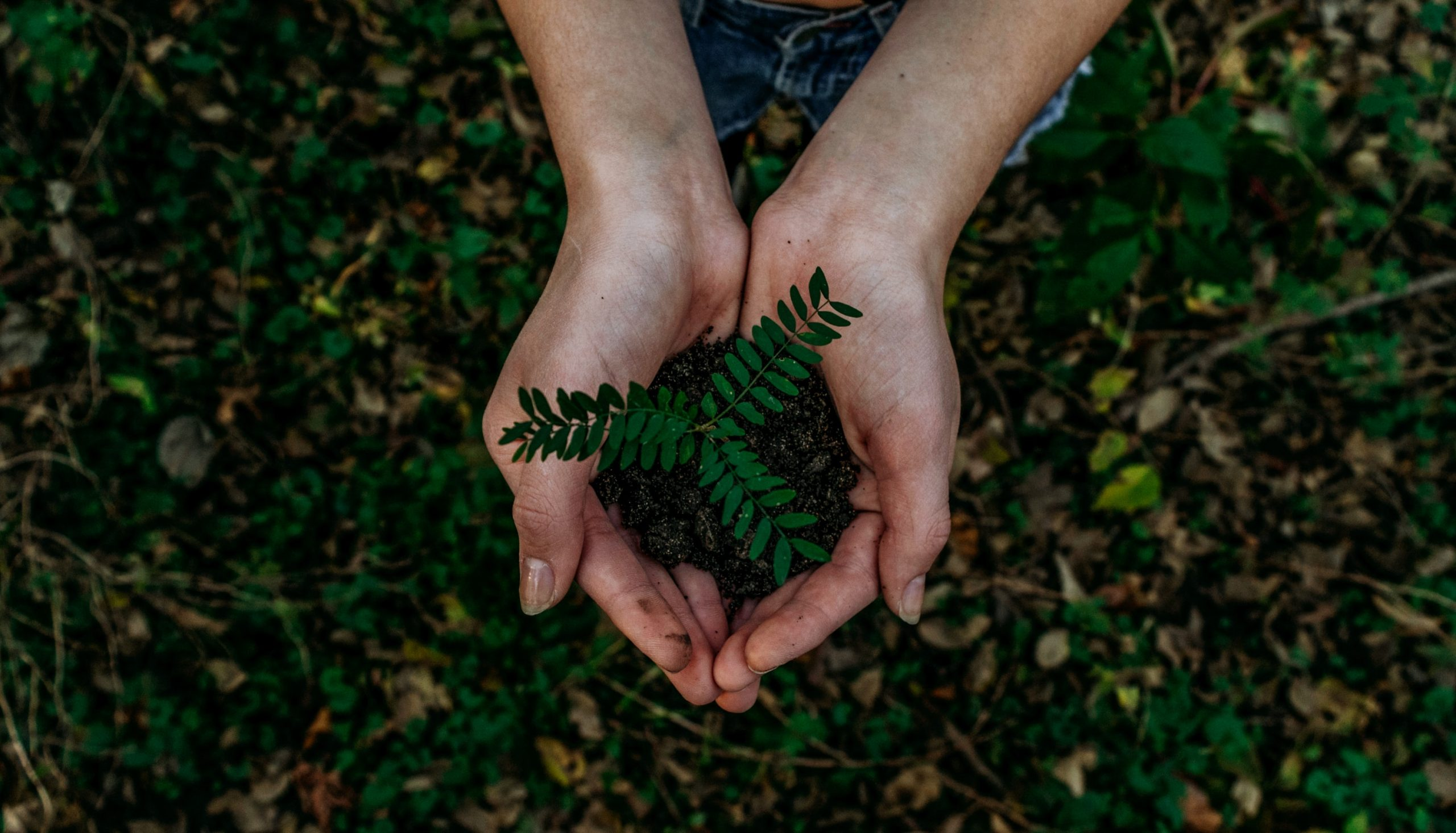 8 Green Small Business Initiatives for 2021